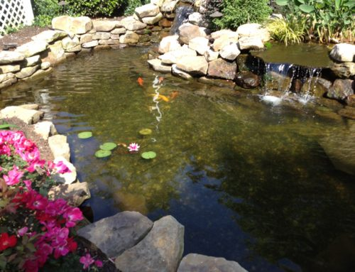 How To Build A Koi Pond You'll Love In 9 Expert Steps