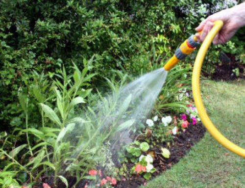How to Water Properly in the Summer Heat