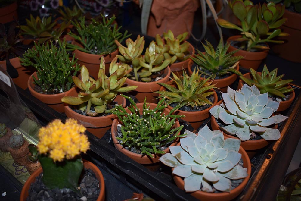 Different Varieties Of Succulents In Nashville Garden Center
