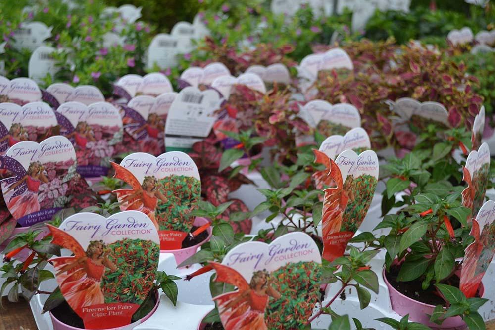 Fairy Garden Plants At Nashville Garden Center