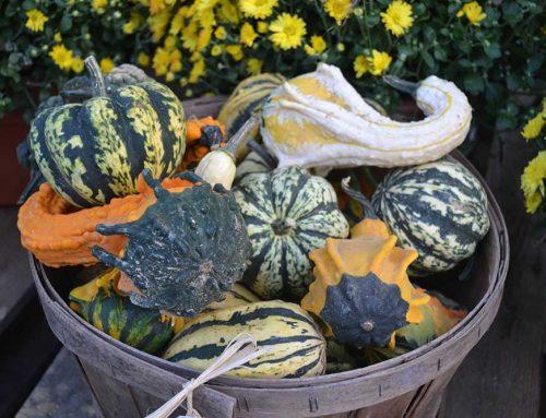 Gourds In Basket At JVI Secret Gardens