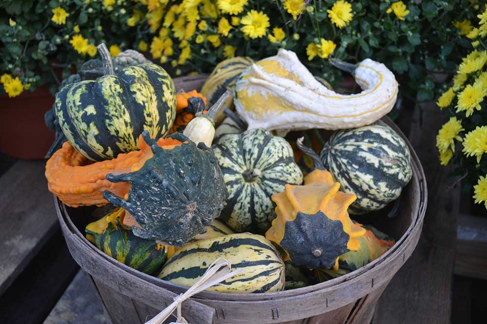 Gourds In Basket At JVI Secret Gardens