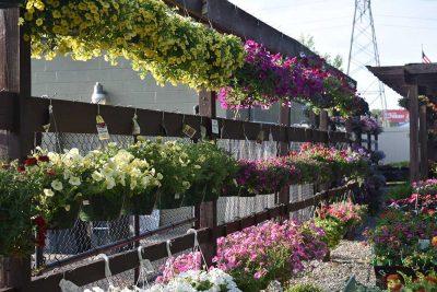 Hanging Plants For Mothers Day At Nashville Garden Center