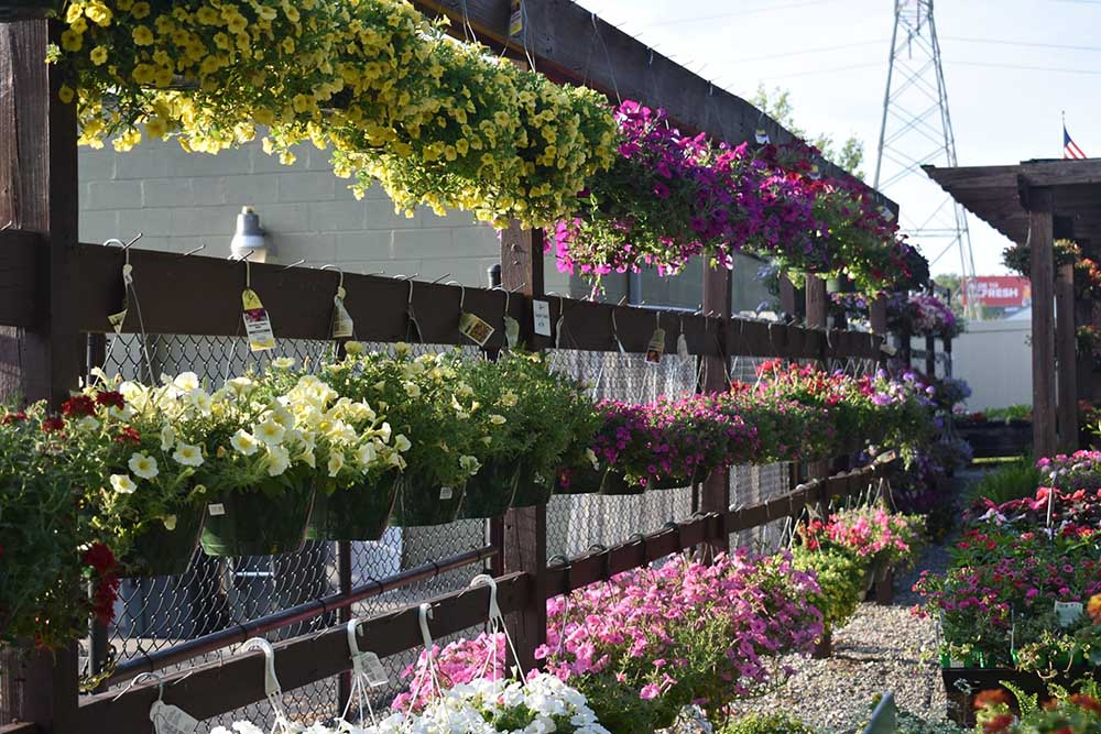 Hanging Plants For Mothers Day At Nashville Garden Center