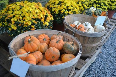 Small Pumpkins In Basket At JVI Secret Gardens
