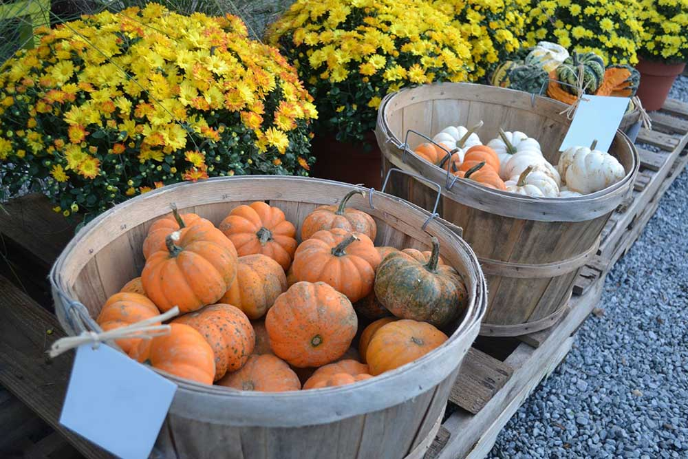 small pumpkins in basket at jvi secret gardens jvi secret gardens