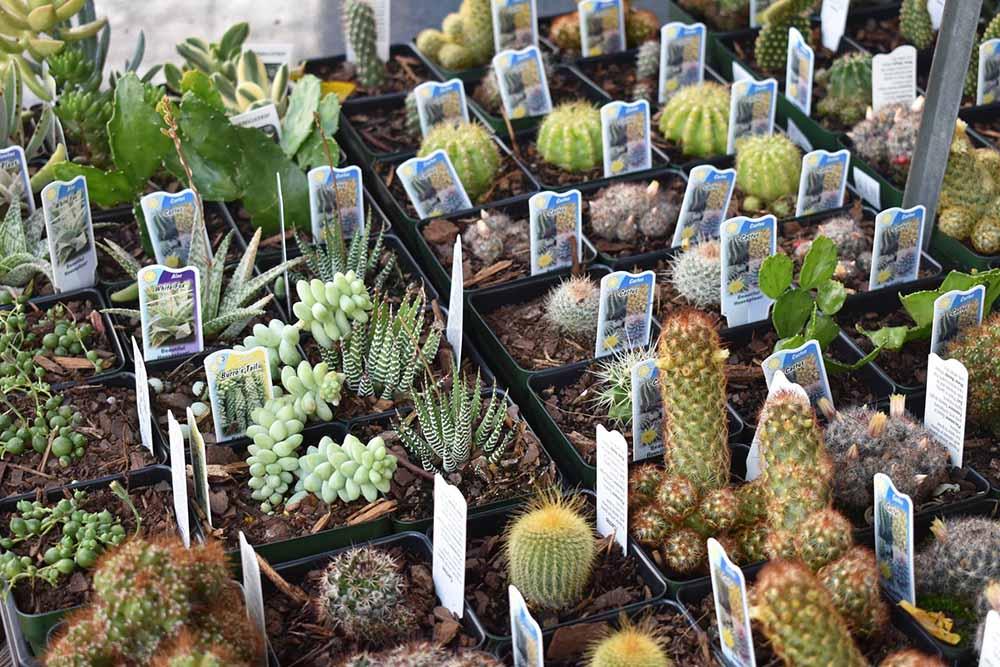 Various Cactus Plants At JVI Secret Gardens