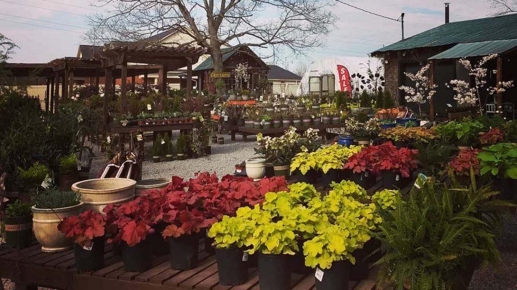 JVI secret gardens outdoor plant area