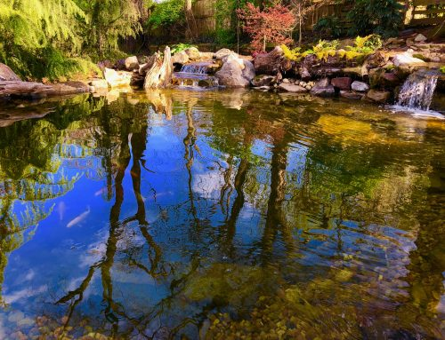 Remove Pond Algae: Troubleshooting A Common Pond Problem