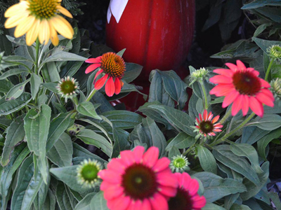 Red and yellow coneflowers