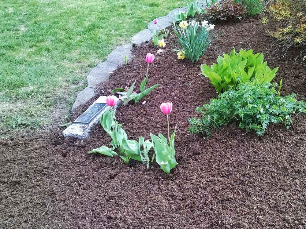 Mulch in garden surrounding plants