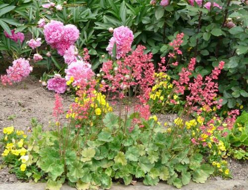 3 Best Low Maintenance Plants For Landscaping Your Nashville Home