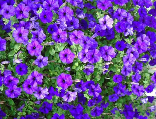 7 Of The Best Plants For Shaded Areas In Your Nashville Garden
