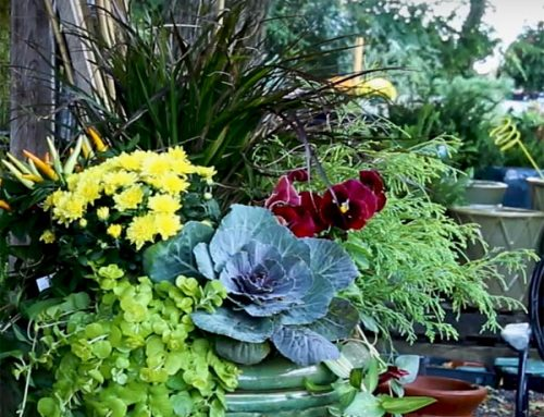 Fall Planters: 3 Parts To Creating Your Flowering Fall Decoration
