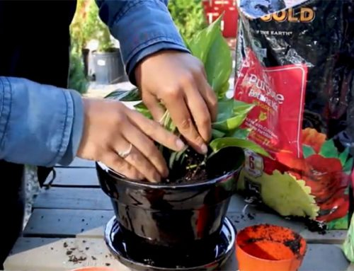 Pot Garden Plants: How To Easily Transplant In 5 Steps