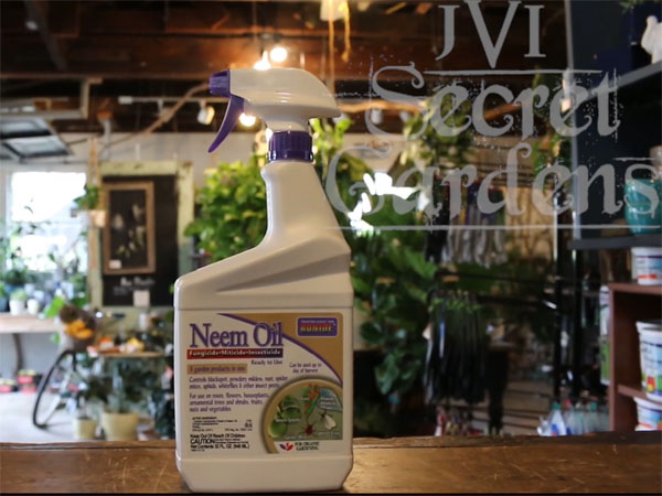 Neem oil can help get rid of and prevent houseplant pests