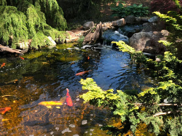 Following the right process for how to build a koi pond can give you this beautiful pond