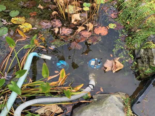 Draining a pond using sump pumps to clean it for spring