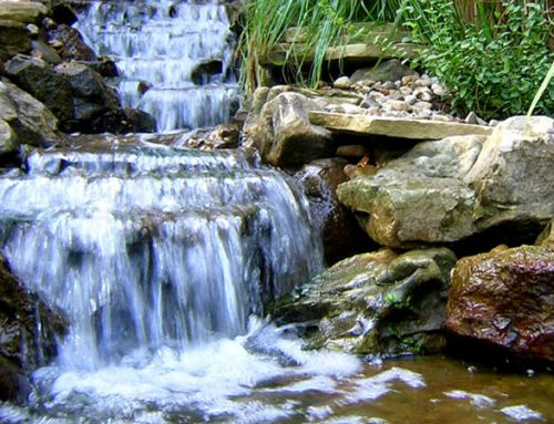 How To Fix A Pond Leak And What Can Cause Them