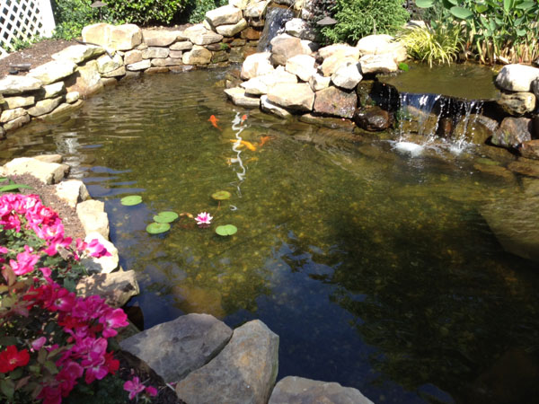 The True Cost Of A Quality Koi Pond In Nashville, TN