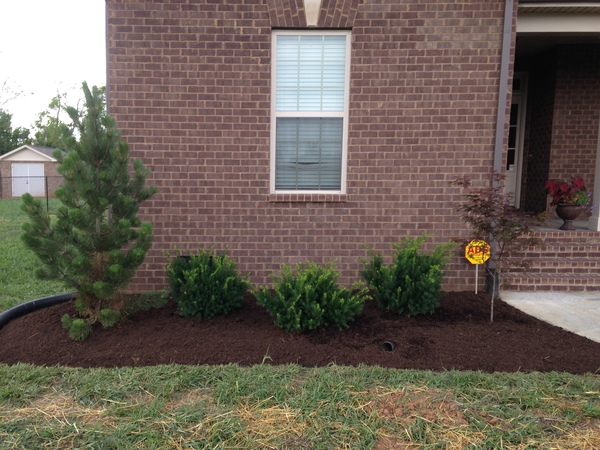 New front yard plantings and grass seeding as part of a landscaping project in Murfreesboro