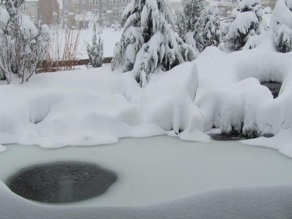 The Most Suitable Winter Pond Maintenance Process For Nashville