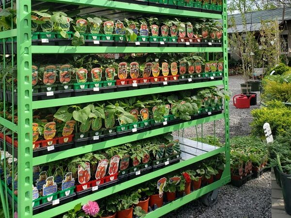 The Best Herbs To Plant In Spring For Your Garden In Nashville