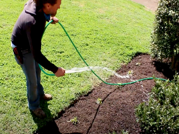 Watering newly planted plants